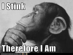 I Stink  Therefore I Am