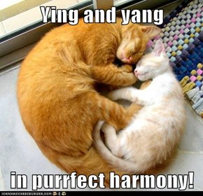 Ying and yang  in purrfect harmony!