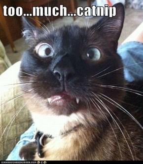 too...much...catnip