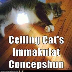 Ceiling Cat's Immakulat Concepshun
