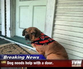 Breaking News - Dog needs help with a door.