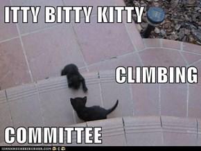 ITTY BITTY KITTY CLIMBING COMMITTEE