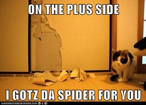 ON THE PLUS SIDE  I GOTZ DA SPIDER FOR YOU