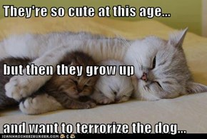 They're so cute at this age... but then they grow up and want to terrorize the dog...