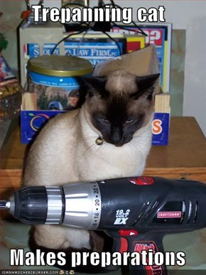 Trepanning cat  Makes preparations