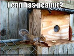 i can has peanut?
