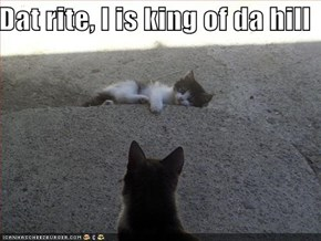 Dat rite, I is king of da hill