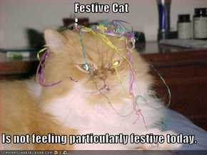 Festive Cat  Is not feeling particularly festive today.