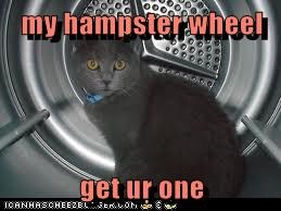 my hampster wheel  get ur one