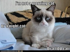 I'm not a morning cat. Or a night cat. Or a YOU cat.