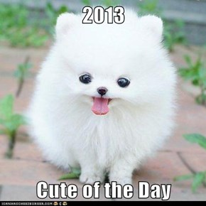 2013  Cute of the Day