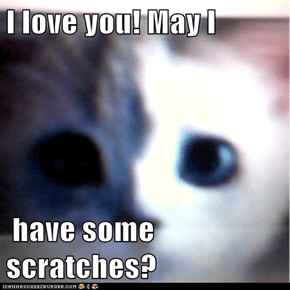 I love you! May I   have some scratches?