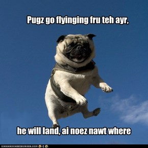 Pugz A-plenty, Pugs Galore