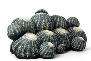 Cactus Couch