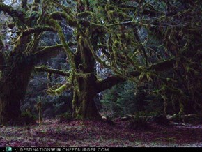 Quinault Rain Forest, Washington State