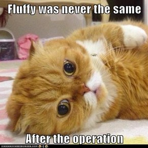 Fluffy was never the same   After the operation
