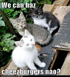 We can haz  cheezburgers nao?