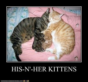 HIS-N'-HER KITTENS