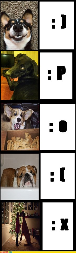The many smileys if dogs