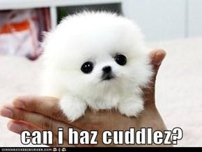 can i haz cuddlez?