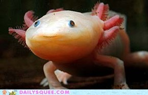 "Axolotl: Does it deserve being called ""Aquatic monster""?"