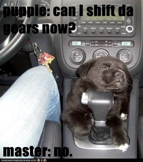 puppie: can I shift da gears now?  master: no.