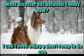 What disaster haz befallen Timmy now?  I can't even enjoy a short romp in da sno