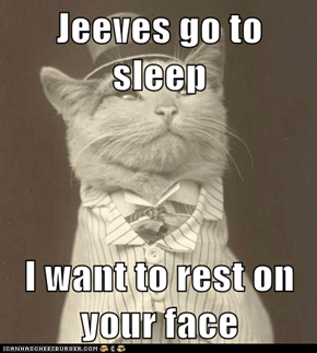 Jeeves go to sleep  I want to rest on your face