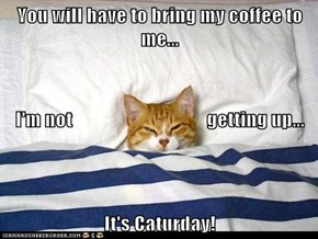 You will have to bring my coffee to me... I'm not                                   getting up... It's Caturday!