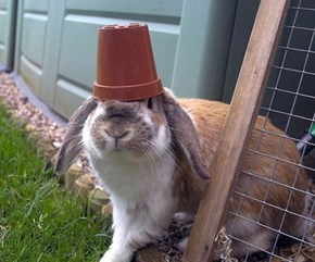 Bunday: Pot Head