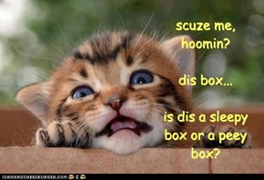 scuze me, hoomin?  dis box...  is dis a sleepy box or a peey box?