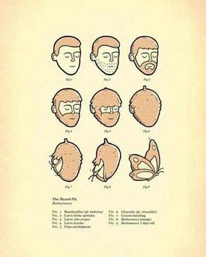 The Beard-Fly