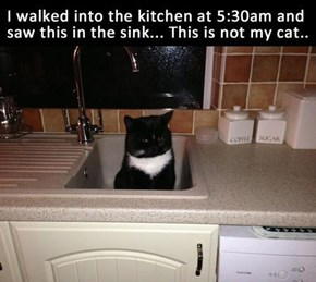 Darn Sink Cats are at it Again...