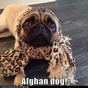 Afghan dog!