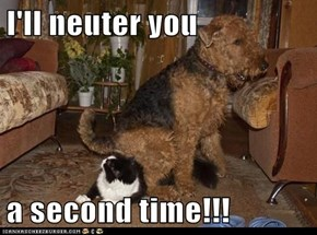 I'll neuter you  a second time!!!