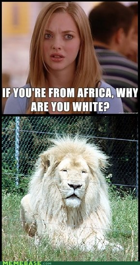 You Can't Just Ask Lions Why They're White!