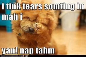 i tink tears somting in mah i  yan! nap tahm
