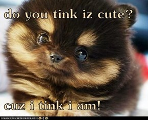 do you tink iz cute?  cuz i tink i am!