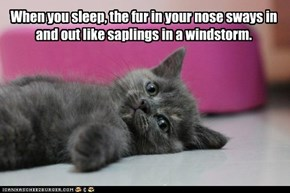 When you sleep, the fur in your nose sways in and out like saplings in a windstorm.