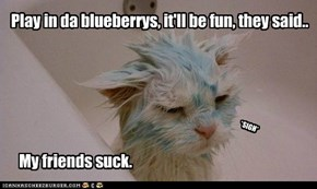 Play in da blueberrys, it'll be fun, they said..