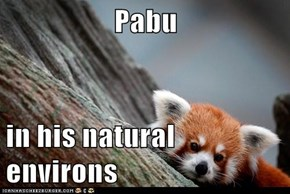 Pabu  in his natural environs