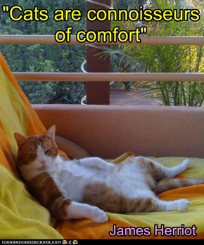 """Cats are connoisseurs  of comfort"""