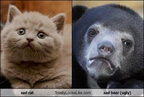 sad cat Totally Looks Like sad bear (ugly)