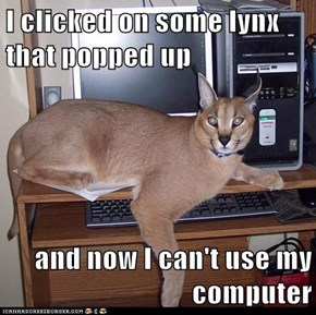 I clicked on some lynx that popped up  and now I can't use my computer
