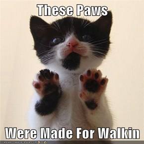 These Paws  Were Made For Walkin