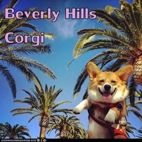 Beverly Hills Corgi