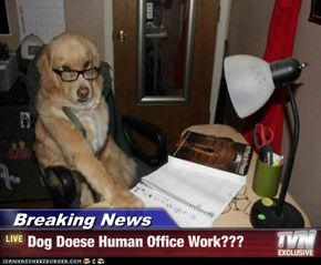 Breaking News - Dog Doese Human Office Work???