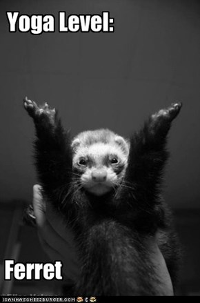Ferret Yoga