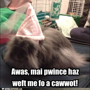 Awas, mai pwince haz weft me fo a cawwot!