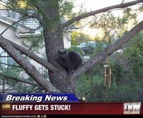 Breaking News - FLUFFY GETS STUCK!